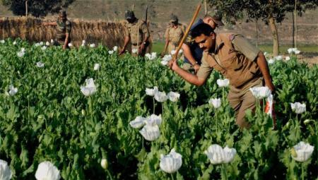 Malda opium Police destroy